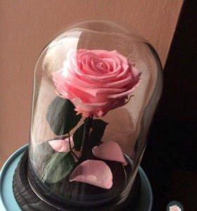 Роза в колбе (Отличный подарок) быстрая доставка