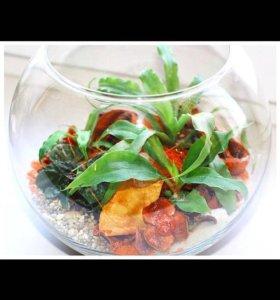 Аквариумные растения в декоративных вазах(Ваби-Кус