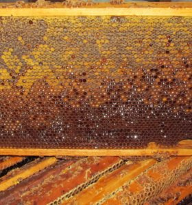 Мед в сотах свежий (рутовские рамки)