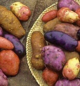 Семейной картофель!