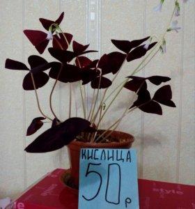 Продам цветы,цена50—150руб.