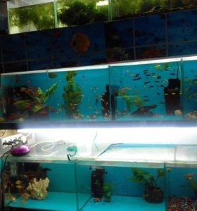 Рыбки мирные