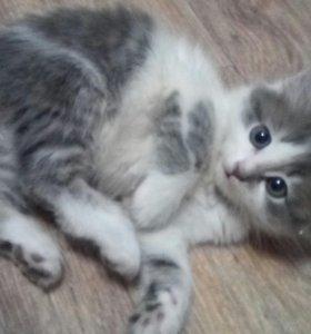 Кошечка в добрые руки)