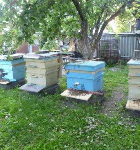 пчелы с ульями