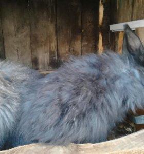 Кролик пуховый