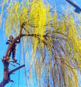 Удаление и обрезка деревьев по Большому Сочи