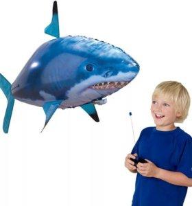 Летающая рыба-акула