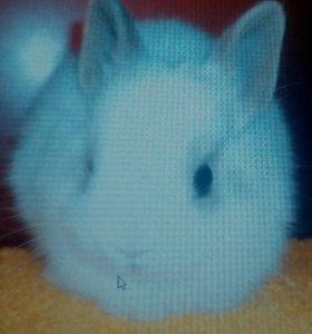 Кролик карликовый. 15 заек