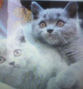 5 котят -2мес.