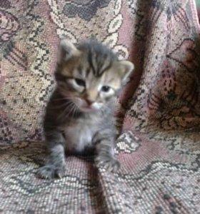 Маленькие котята в добрые руки