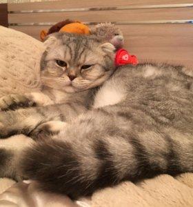 Красивый котик на вязку