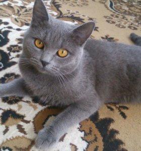 Кошечка ждет кота