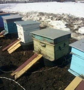 Пчёлы абмен продажа