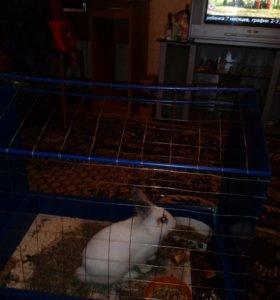 Продам декоротивного кролика