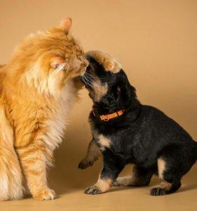 Передержка любимых животных