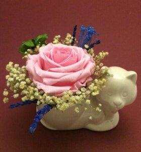 Живая роза на спинке у кошки.Сувениры и подарки.