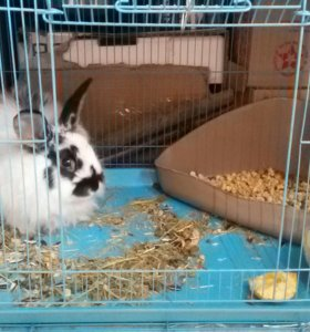 Продам декоративного ангорского кролика.