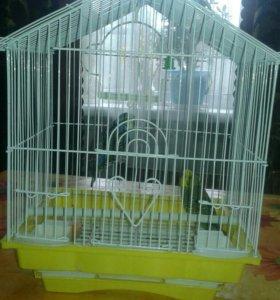 Попугайки