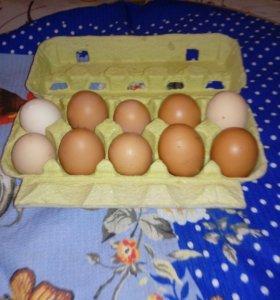 Куриное деревенское яйцо