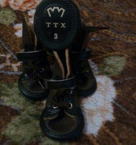 Обувь для маленькой собачки
