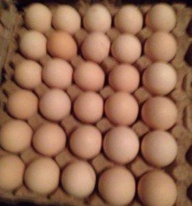 Яйца домашние оптом