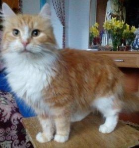 Котята от ОЧЕНЬ пушистой кошки