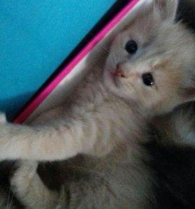 Котята в добрые руки ❤