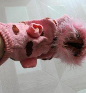 Одежда для кошки/собачки