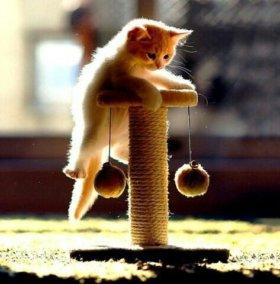Когтеточка для котят. Выполним на заказ.