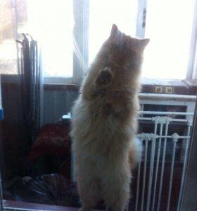 Котик кострированный, ласковый и добрый