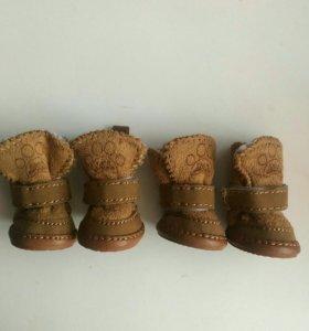 Ботиночки для миниатюрной собачки