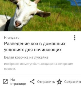Овцы и козы