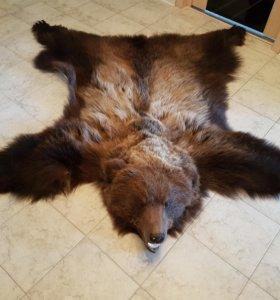 Коврик медведя