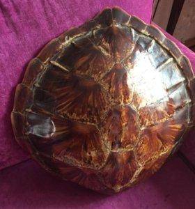 Панцырь большой морской черепахи
