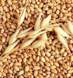 Пшеница, ячмень по 8 руб.