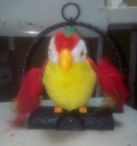 Попугай повторяша новый