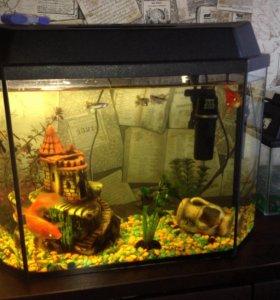 Аквариум 60 литров с рыбками и декором