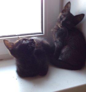2месячные котята к туалету приучена