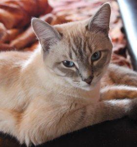Кот на вязку 🔥🔥🔥