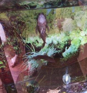 Аквариум с рыбками на 50 литров