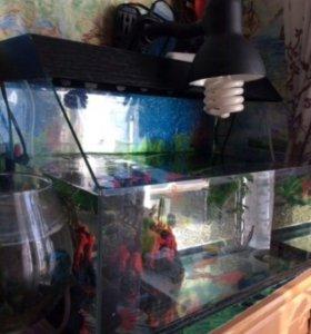Дом для черепахи террариум аквариум