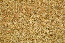 Отсев пшеницы