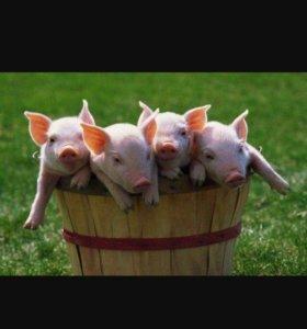 Деревенское мясо свинины