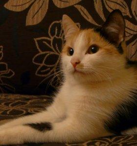 Кошка Дикси