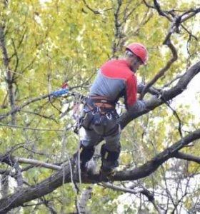 Опиловка спил деревьев