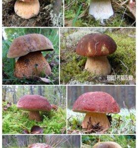 Сухой Белый гриб