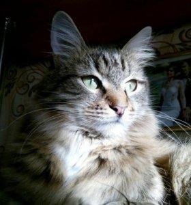 Бесплатно. Кот, 3 года, зовут Марсик.