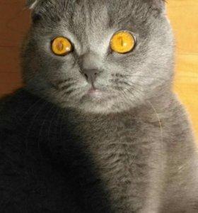 Кошка на вязку.