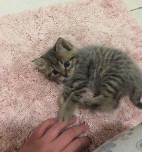 Котенок в добрые руки!