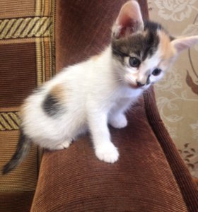 Кошечки-сестрички